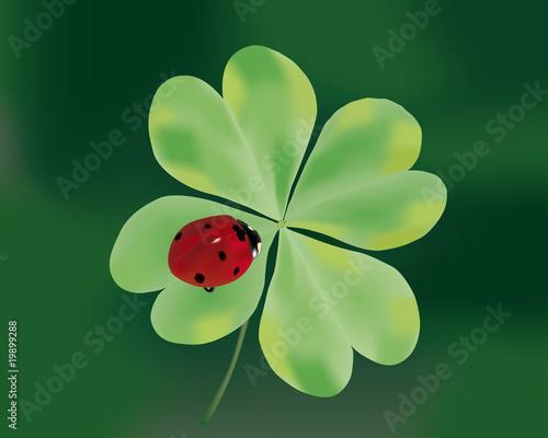 Quadrifoglio con coccinella immagini e vettoriali - Immagini di quadrifoglio a quattro foglie ...