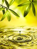 Fototapety Blätter hängen über Wasser