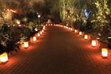 Fototapety luminarias through desert foliage