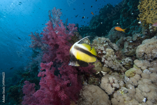 Tropical fish and vibrant reef