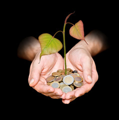 Hands with tree growing from pile of coins