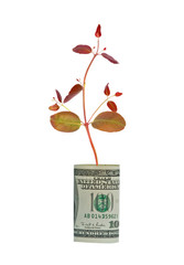 Tree shoot growing from dollar bill