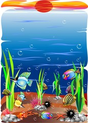 Animali Mare-Sea Ocean Animals-Animaux Mer 6