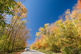 White car on an unpaved dirt road in a vibrant autumn forest poster