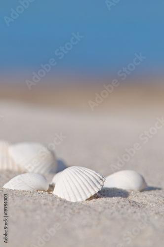 Endlich Sommer!, Muscheln am Sandstrand, Ostsee