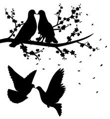 Pigeons kissing.