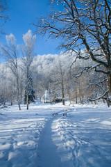 Footpath in snowy park
