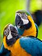 Quadro Beautiful colorful parrot