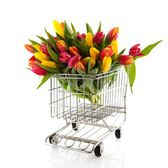 Shopping tulips