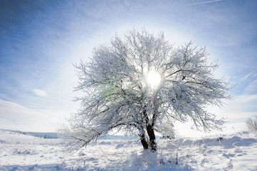 Sky, tree and snow