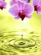 Orchideen der Sinnlichkeit