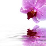 Fototapety Orchideen Hintergrund