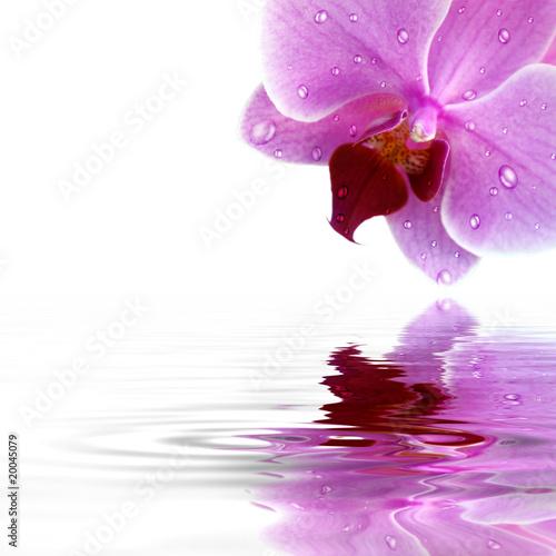 Orchideen Hintergrund