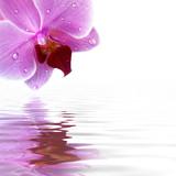 Orchidee Spiegelung