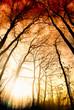 Amazing summer sunset in forest. Sun rays break through trees