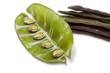 Indian Bean