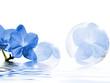 Aprilfrische blau