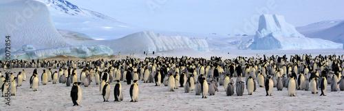 Foto op Plexiglas Antarctica Colonie de manchots empereurs (Antarctique, Mer de Ross)