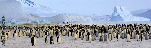 Colonie de manchots empereurs (Antarctique, Mer de Ross) - 20072854