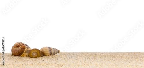 image de coquillages posés sur le sable à la plage