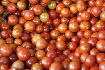 Tomates cherry 07