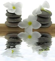 ambiance zen, galets, fleurs, bambou, fond blanc