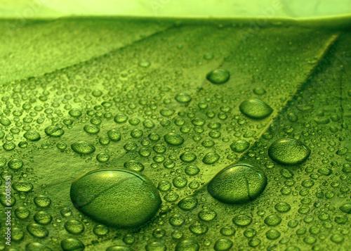 canvas print picture Plantleaf