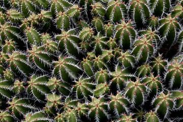 Kaktusfeld