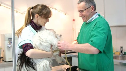 vétérinaire préparant son injection