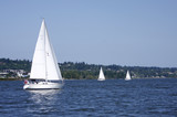 Sailboats on the Columbia River on a nice day. poster