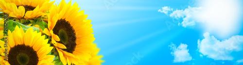tournesol en fleur fond ciel bleu - rayons du soleil - bannière