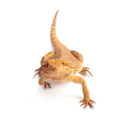 Kriechendes Reptil auf der Jagd