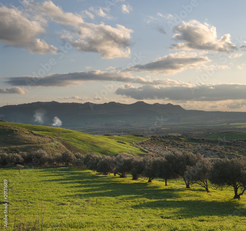 valley cultivated with olive trees at sunset - 20131689