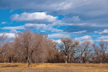 Bare Trees and Clouds at the End of Winter