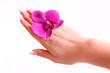manicure,handpflege