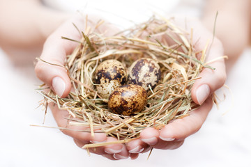 bird nest in hand