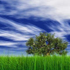 High resolution 3D baobab tree in grass and a blue sky