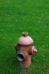 close up shot of extinguish on green grass