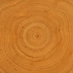 Hintergrund: Wachstumsringe - Holz