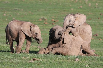 Baby Elephants Playing Games