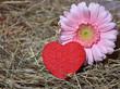 Rosa Blume mit Herz im Stroh