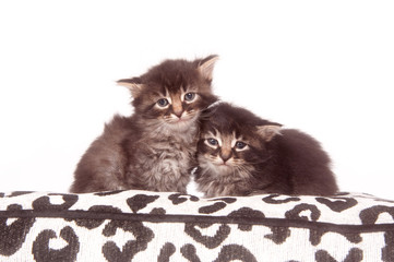 two kittens on a cushion