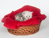 Two cute kittens in a basket