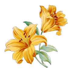 yellow flower,lily