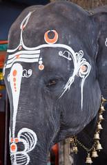 Close up photo of  sacred elephant eye in Hindu temple