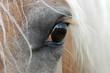 Fototapeten,pferd,anblick,pferd,auge
