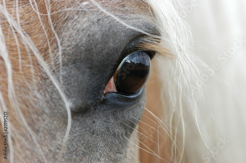 Fototapeten,pferd,eye,anblick,haff