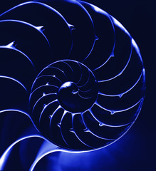 Blue nautilus, close up