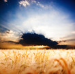 farmland and beautiful sunset