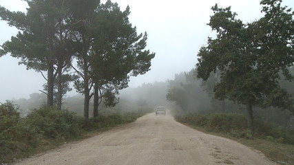 Forest road car in fog